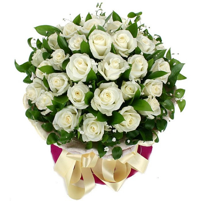 Pure Mind White Roses
