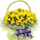 Freesia spring
