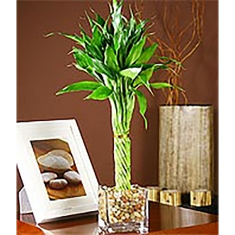 Tropical Bamboo in Glass